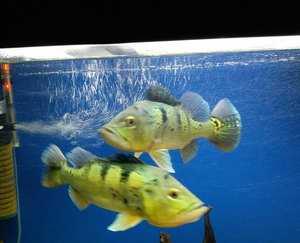 فروش یا معاوضه ماهی آکواریوم