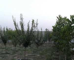 باغ ٤ساله یوسف رضا